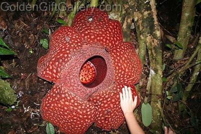 بزرگترین و کوچکترین گل دنیا
